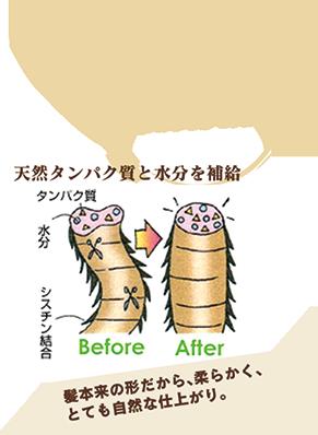 天然タンパク質と水分を補給